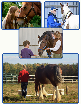 Equine Assisted Therapy Services