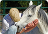 Eap, Equine Assisted Psychotherapy